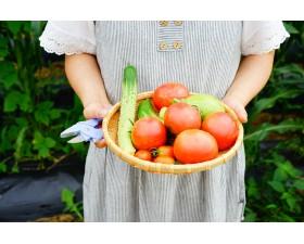 Уход за помидорами после посадки